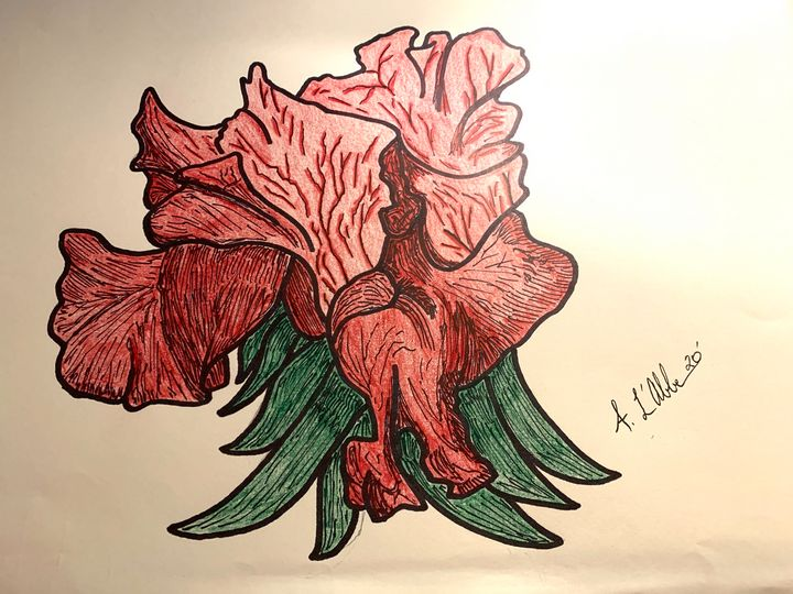 Red Iris - Amy's Art