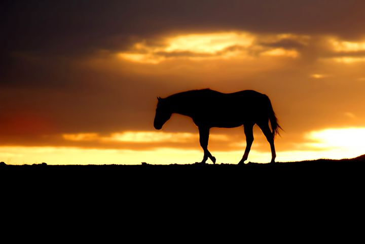 Horse at Sunrise - Ad Astra Images