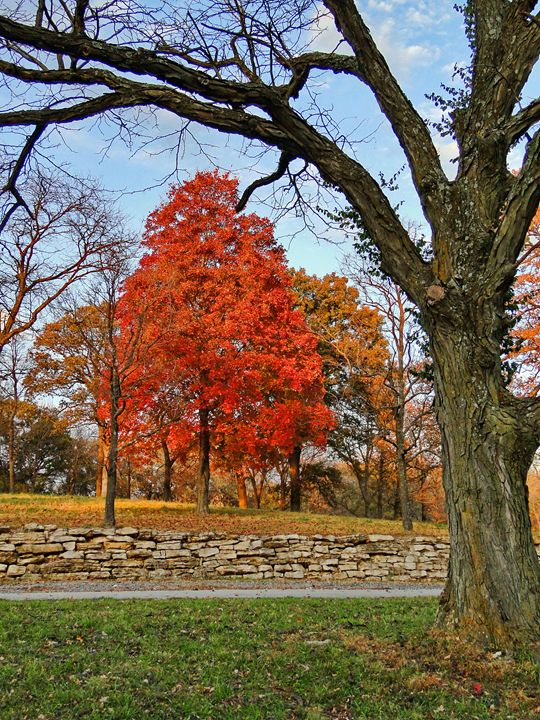 Fall Colors - Ad Astra Images