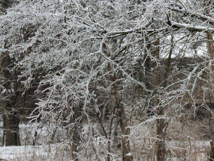 Iced tree - Britni Stark