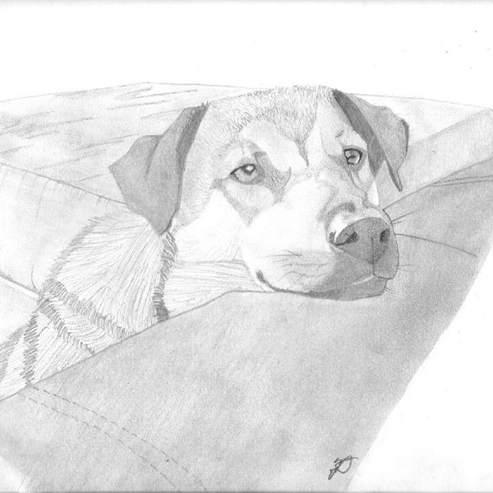 Begging Dog - Emili K Productions Custom Pencil Drawings