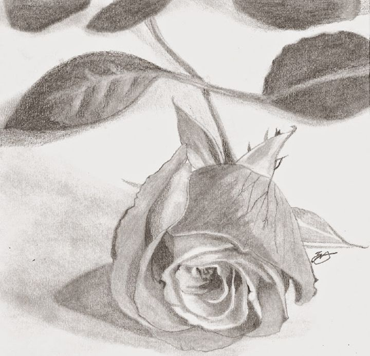 The Rose - Emili K Productions Custom Pencil Drawings