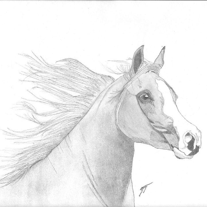 The Arabian Horse - Emili K Productions Custom Pencil Drawings