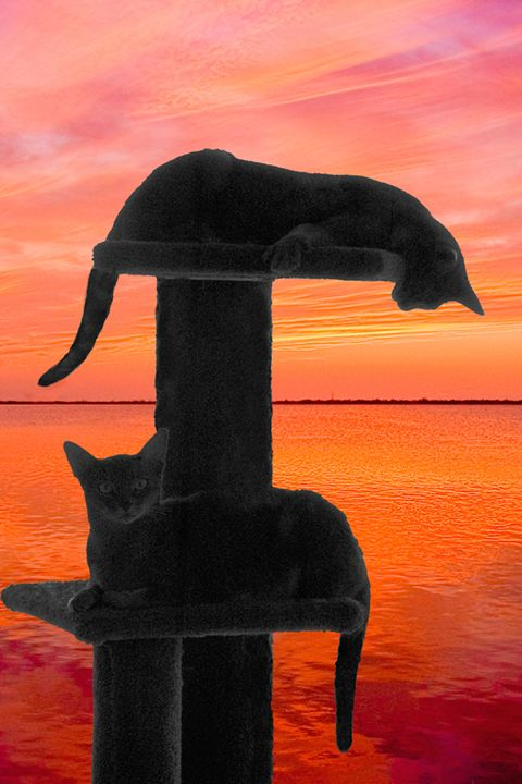 2 Cat Sunset - Key West Images