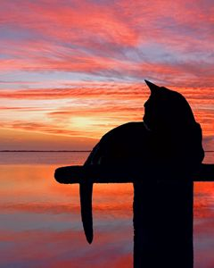 Cat Sunset