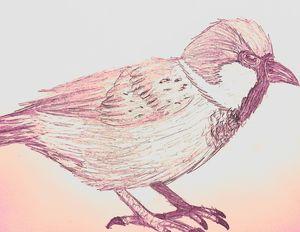 Little bird - Skyler Heart Art