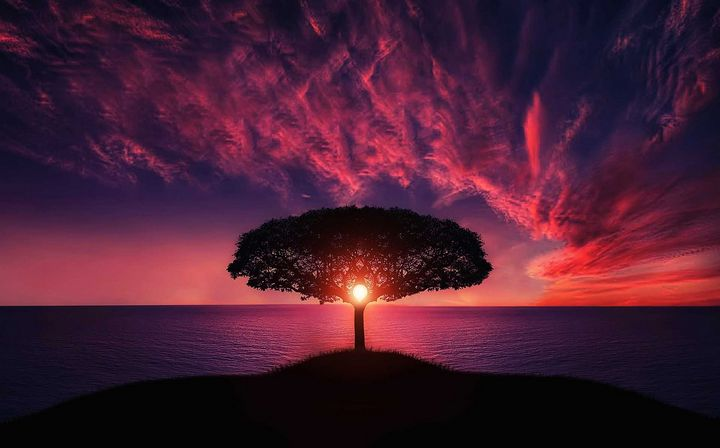 Silhouette of Tree Near Body of Wate - An artistic gift