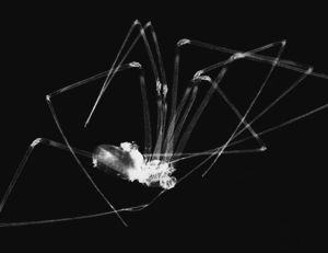 Insect Photogram