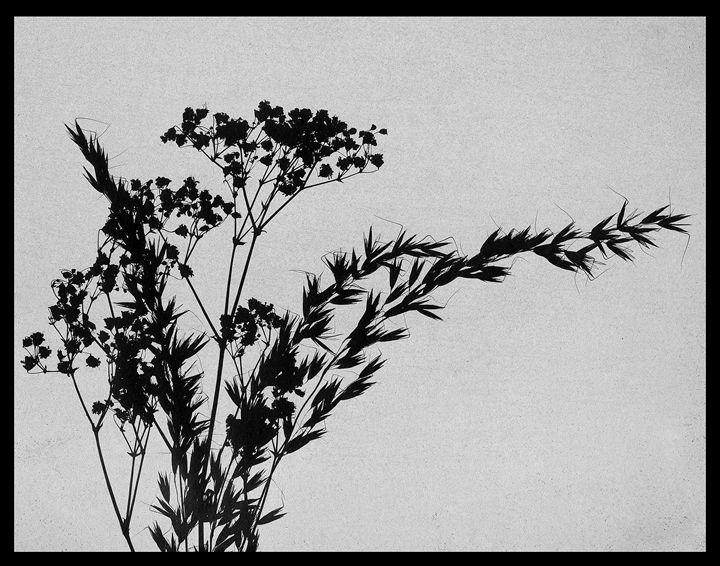 Inverted Cyanotype - Dani Evans