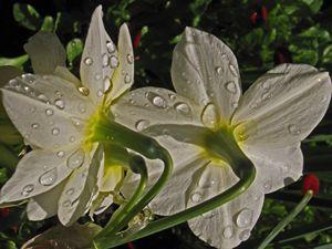 Raindrops Alive