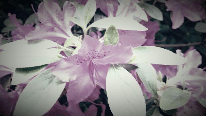 purple with a bow - AMATEUR PHOTOS