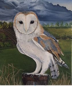 Original oil painting barn owl