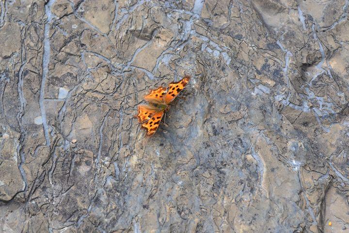 orange butterfly - kerrieficklin