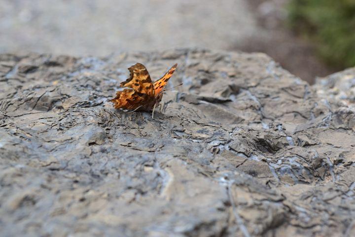 butterfly - kerrieficklin