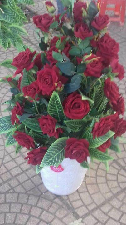 hoa hồng - Good-A