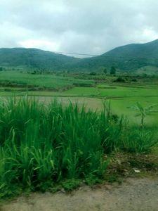 đồng lúa và dãy núi