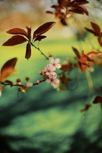 Portland Blossoms