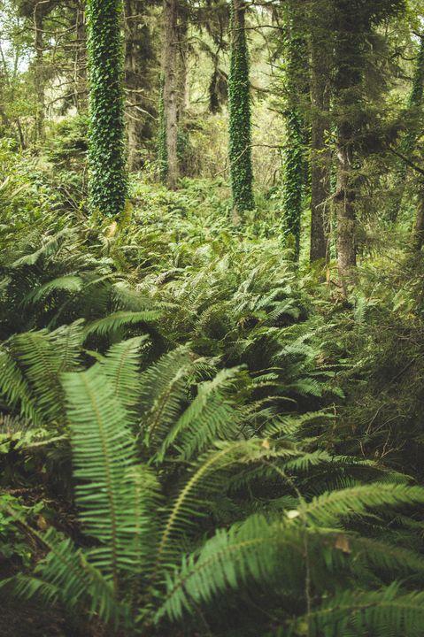 Plant Life - Photography