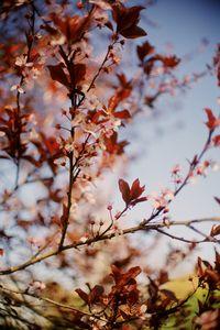 Portland Oregon Blossoms