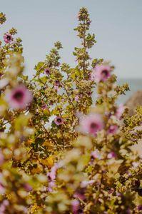 San Francisco Blooms