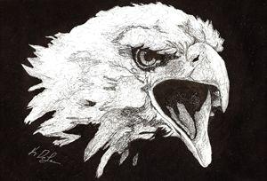 """""""Screaming Eagle"""""""