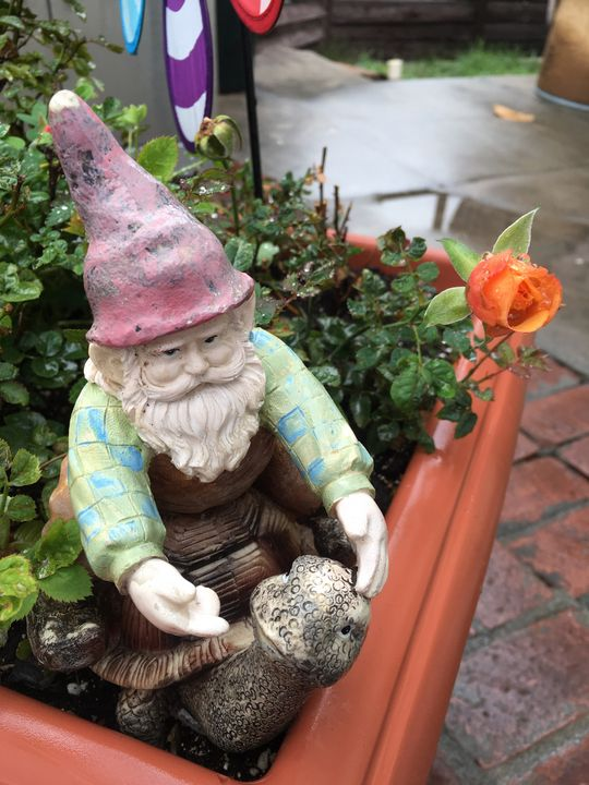 Gnome Riding Turtle in the Roses - Anaj Art