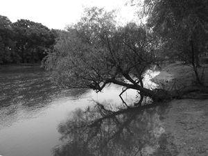 River's Edge - Sue Heath Originals