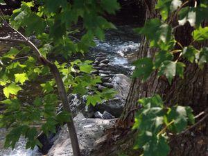 Mountain Stream Through The Trees