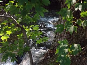 Mountain Stream Through The Trees - Sue Heath Originals