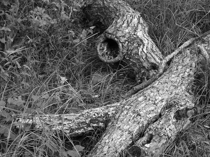 Fallen Tree - Sue Heath Originals