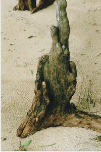Cypress Fingers - Sue Heath Originals