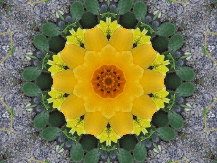Cactus Flower - Starlight