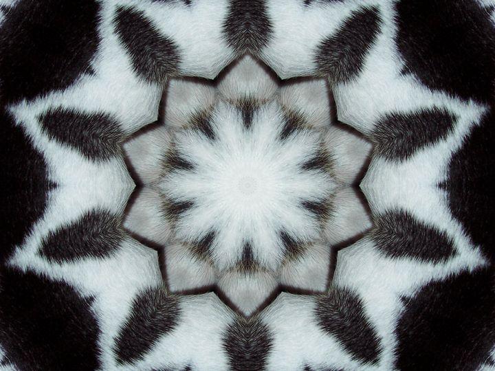 Natures Coat - Starlight
