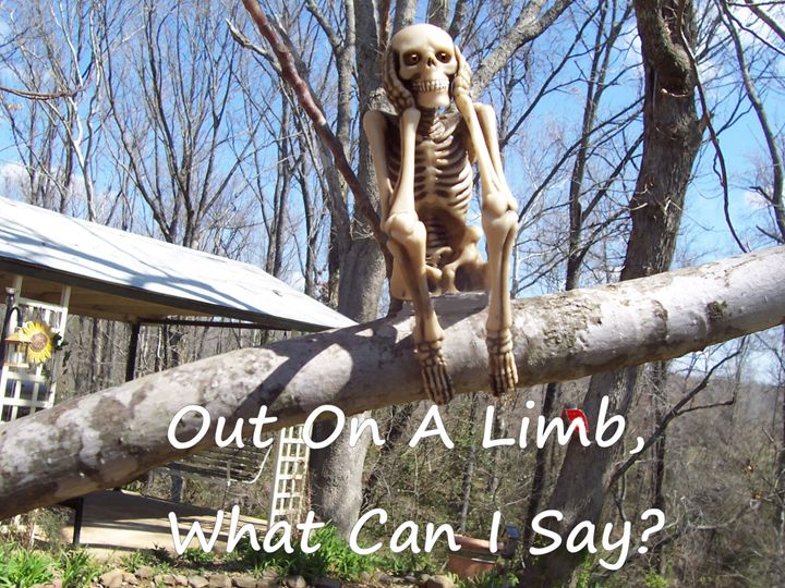 Out On A Limb - Starlight