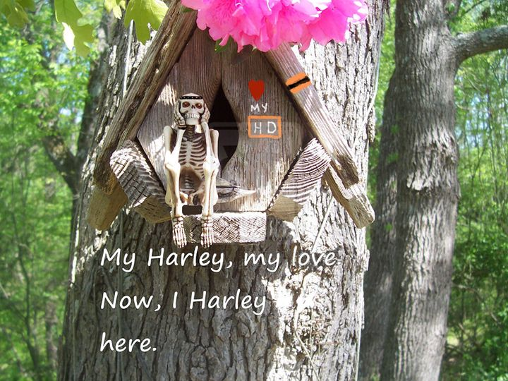 My Harley, my love. - Starlight