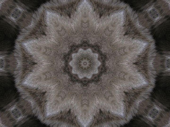Photo Of A Cat--Kaleidoscope Design - Starlight