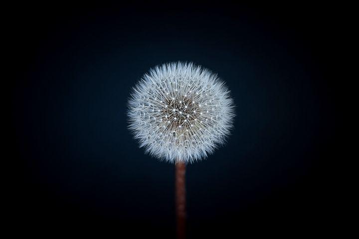 make a wish - Greenstone Studio