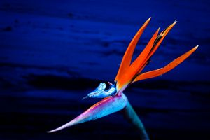 Bird of Paradise in Bold