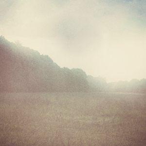 Mist valley landscape