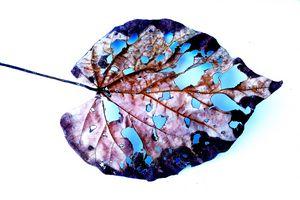 leaf skeleton in vivid