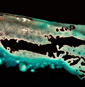 Alligator Atoll