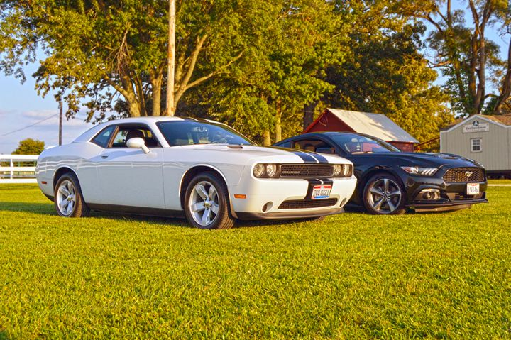American Rivals - Boomerob photography