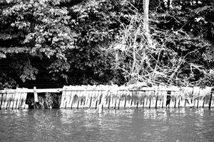 Indian Lake Island Fence