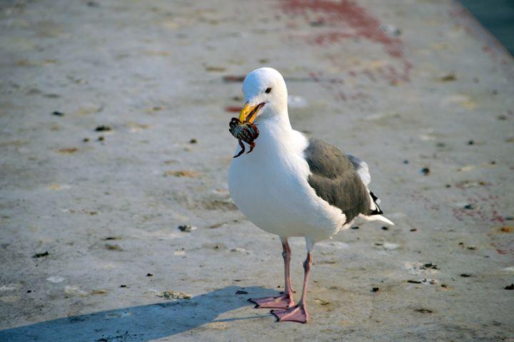 """Seafood for Everyone"" - Sandra Hagan"