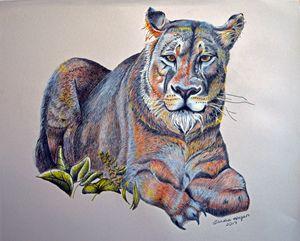 """Lioness at Rest"" - Sandra Hagan"