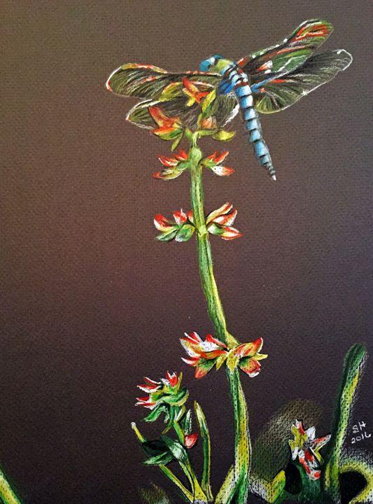 Dancing Dragonfly - Sandra Hagan