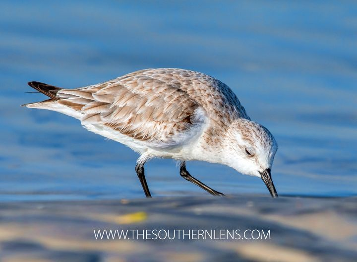 digging in the sand - The Southern Lens