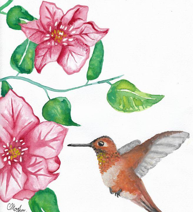 Rufous Hummingbird - Chelsey Mosher Art