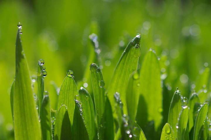 Grass pearls - Gabi Siebenhuehner