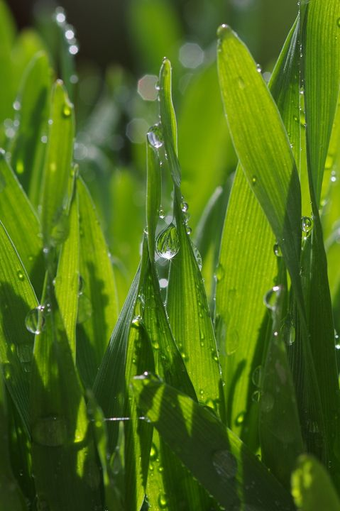 Grass and drops - Gabi Siebenhuehner